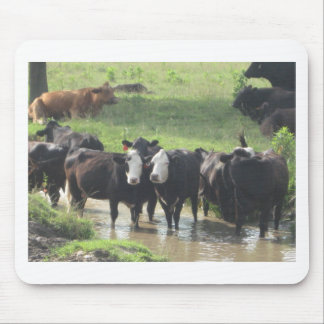 ~ Cows Lookin' Back ~ Mouse Pad