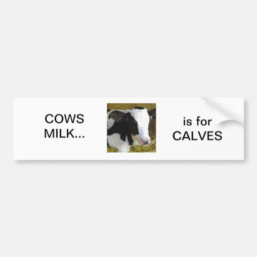 Cows milk is for calves bumper stickers