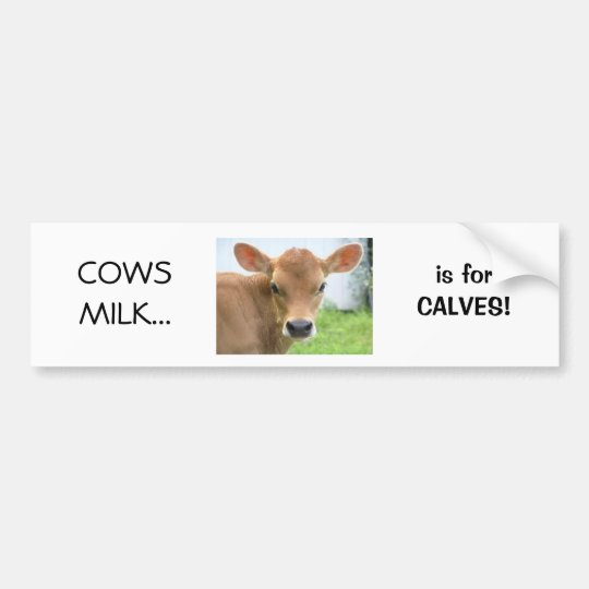 Cows Milk is for Calves design 2 Bumper Sticker