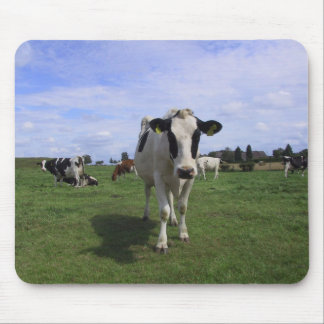 Cows Mouse Pad