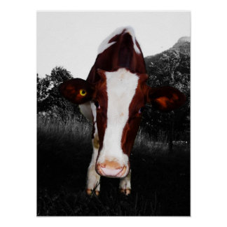 Cows - NOT Always Black and White Poster
