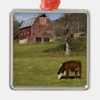 Cows on a farm in West Fairlee, Vermont. Blood Christmas Ornament