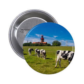 Cows on a meadow with lighthouse buttons