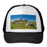 Cows on a meadow with lighthouse hat