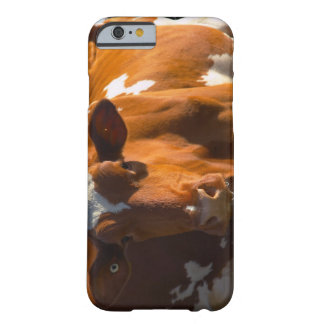 Cows on farm barely there iPhone 6 case