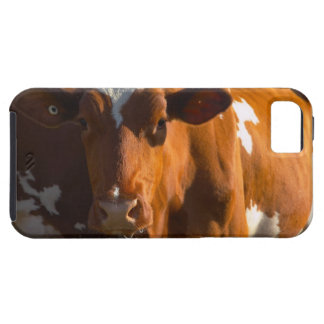 Cows on farm iPhone 5 covers