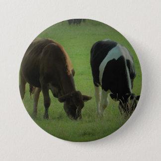 Cows photo Round Badge