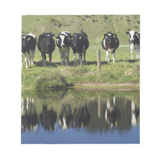 Cows reflected in canal, Henley, Taieri Plain, Notepad