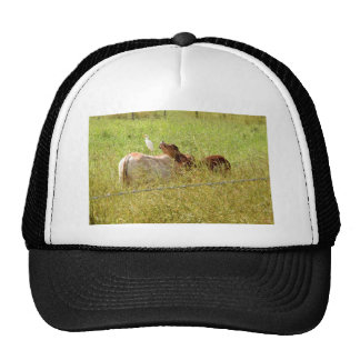 COWS RURAL QUEENSLAND AUSTRALIA CAP