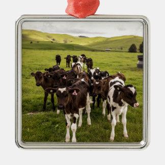 Cows Silver-Colored Square Decoration