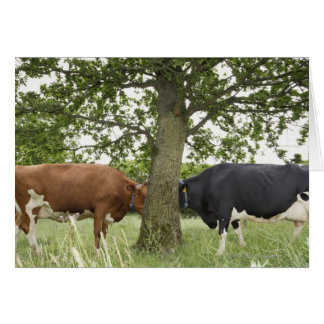 Cows standing face to face behind tree cards