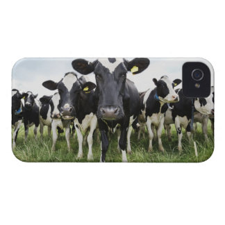 Cows standing in a row looking at camera iPhone 4 Case-Mate case