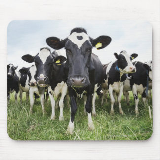 Cows standing in a row looking at camera mouse mat