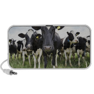 Cows standing in a row looking at camera mp3 speakers