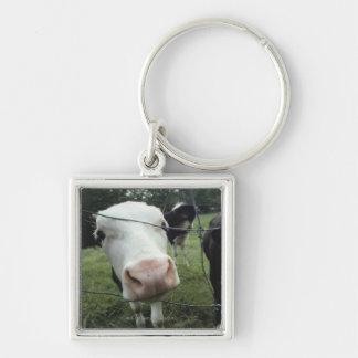 Cows standing in grass pasture, Nova Scotia, Silver-Colored Square Key Ring