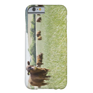 Cows standing in meadow barely there iPhone 6 case