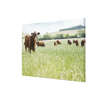 Cows standing in meadow canvas print