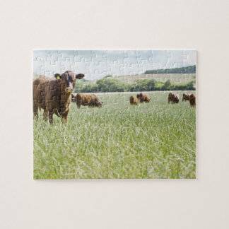 Cows standing in meadow jigsaw puzzle
