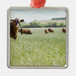 Cows standing in meadow Silver-Colored square decoration