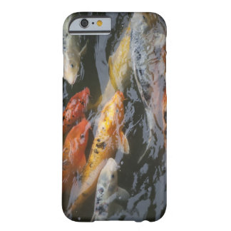 Coy Fish Barely There iPhone 6 Case