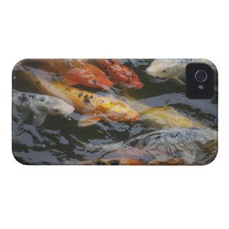 Coy Fish iPhone 4 Case