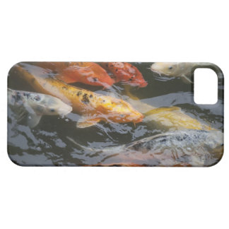 Coy Fish iPhone 5 Covers