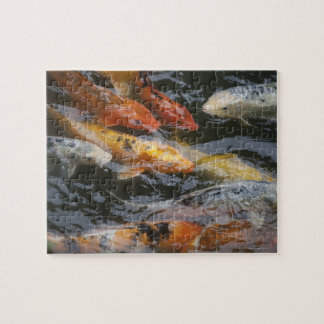 Coy Fish Jigsaw Puzzle