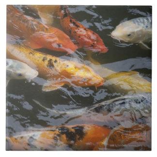 Coy Fish Large Square Tile