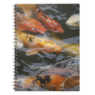 Coy Fish Notebook