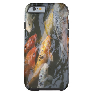 Coy Fish Tough iPhone 6 Case