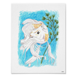 Coy/Koi limited edition print