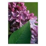 Coy Lilac Greeting Card