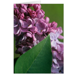Coy Lilac Greeting Card