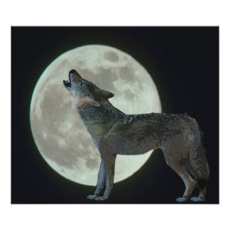 Coyote Howling at the Moon Poster