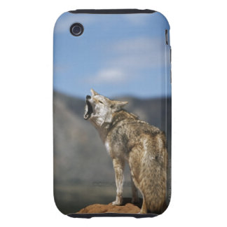 Coyote Howling From High Point iPhone 3 Tough Case
