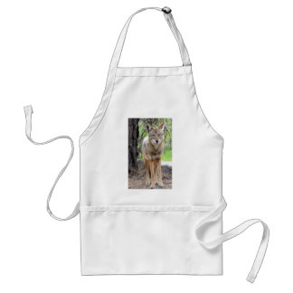 coyote in griffith park 003 standard apron