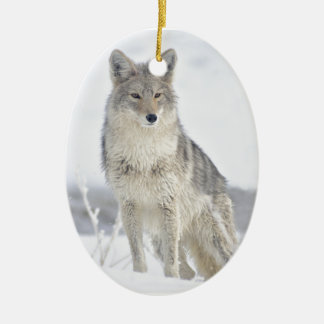 Coyote in Snow at Yellowstone Christmas Ornament