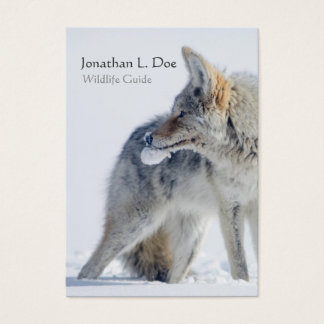 Coyote in Snow Wildlife Guide, Ecologist