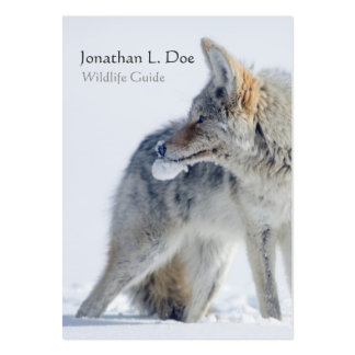 Coyote in Snow Wildlife Guide, Ecologist Pack Of Chubby Business Cards