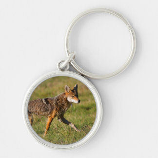 coyote keychains