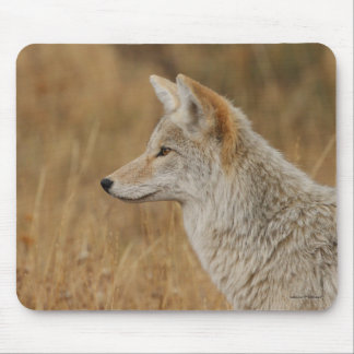 coyote mouse pads