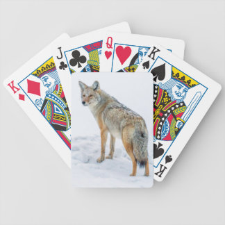 Coyote on alert in snow bicycle playing cards