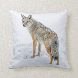 Coyote on alert in snow cushion