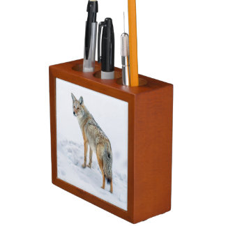 Coyote on alert in snow desk organiser