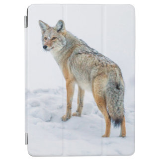 Coyote on alert in snow iPad air cover