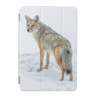Coyote on alert in snow iPad mini cover