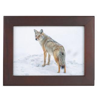 Coyote on alert in snow keepsake box