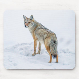 Coyote on alert in snow mouse mat