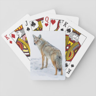 Coyote on alert in snow playing cards