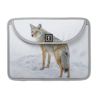 Coyote on alert in snow sleeve for MacBook pro